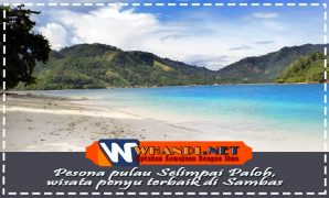 Pesona wisata penyu pulau selimpai paloh Sambas