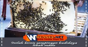 bisnis sampingan budidaya lebah madu